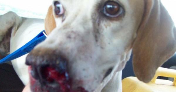 Συνελήφθη επειδή έδερνε τον σκύλο του με βούρδουλα
