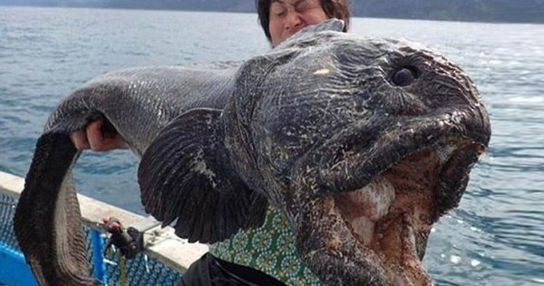 Τερατώδες ψάρι πιάστηκε στην Ιαπωνία (Εικόνες)
