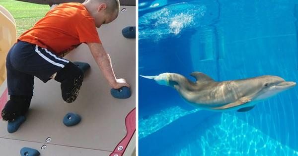 Το αγόρι χωρίς πόδια θέλει να συναντήσει το δελφίνι χωρίς ουρά (Εικόνες)