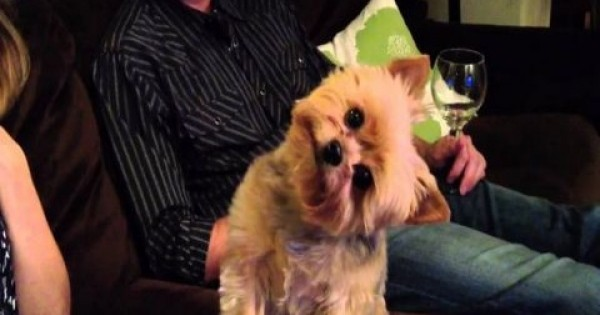 Το ήξερες; Γιατί όταν μιλάμε στα σκυλάκια γυρίζουν στο πλάι το κεφάλι τους;