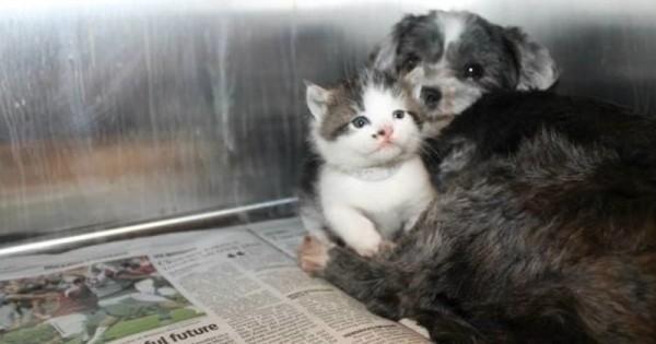 Άστεγος σκύλος πήρε υπό την προστασία του εγκαταλελειμμένο γατάκι. Αυτό που θα δείτε θα σας ζεστάνει την καρδιά… (Βίντεο)
