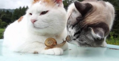 Οι γάτες και το σαλιγκάρι (Βίντεο)