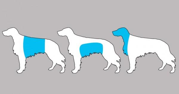 Γνωρίζοντας αυτά τα 11 συμπτώματα μπορείτε να σώσετε την ζωή του σκύλου σας
