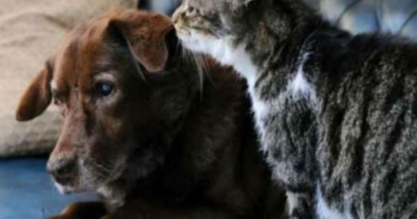 Τυφλός σκύλος βλέπει με τα μάτια της γάτας (Βίντεο)