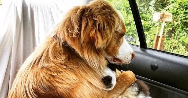 36 «προδομένα» ζώα που οι ιδιοκτήτες τους τα πάνε στον κτηνίατρο (Εικόνες)