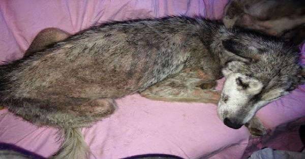 Ένα πανέμορφο σκυλάκι εγκαταλείφθηκε στην μέση ενός αυτοκινητόδρομου… Τι κρυβόταν όμως ακριβώς πίσω του; (Εικόνες)