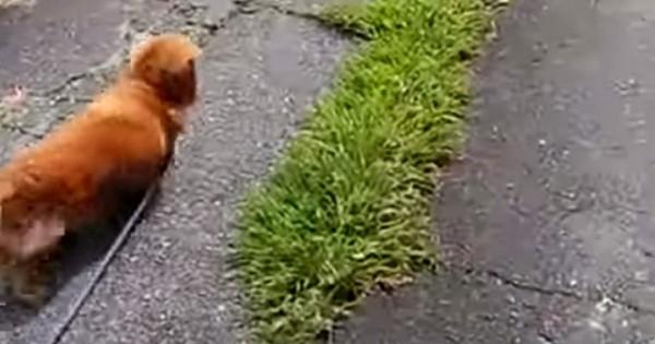 Δείτε πως αντιδρά αυτός ο σκύλος όταν ο ιδιοκτήτης του κάνει πως πέφτει κάτω (Video)