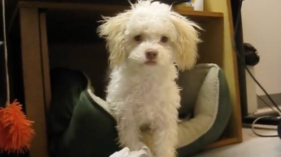 Ο σκύλος που πιάστηκε στα πράσα (Βίντεο)