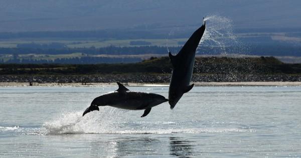 Όταν τα δελφίνια χορεύουν (Εικόνες)