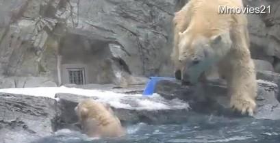 Η μαμά αρκούδα σε αποστολή διάσωσης (Βίντεο)