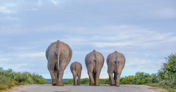 Τα μικρά και μεγάλα θαύματα του ζωικού βασιλείου (Εικόνες)