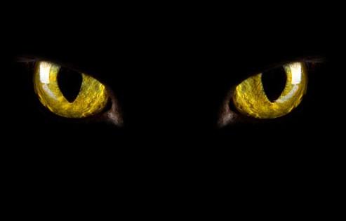 Η ζωή μέσα από τα μάτια μιας γάτας (Βίντεο)