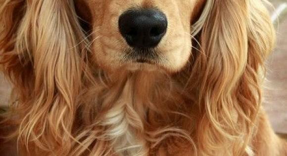 Πόσο στοιχίζει ένας σκύλος; (Εικόνες)