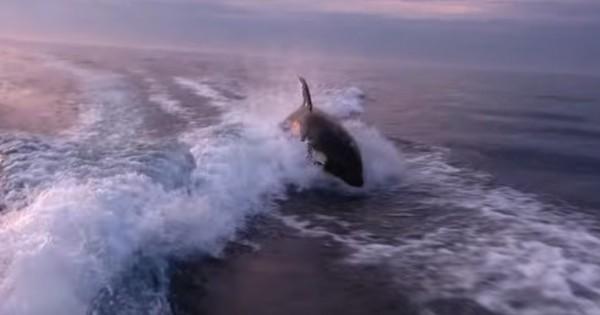 Φάλαινες δολοφόνοι κυνηγούν βάρκα. Στο 1:27 θα τρομάξετε! (Βίντεο)