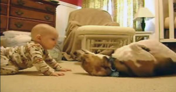 Σκύλος συναντά μωρό για πρώτη φορά (και…λιώνει) (Βίντεο)