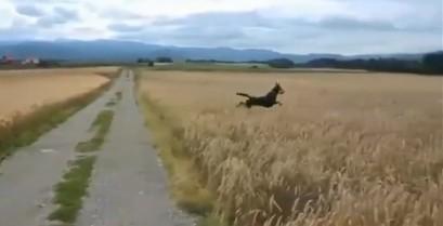 Ένας ευτυχισμένος σκύλος (Βίντεο)