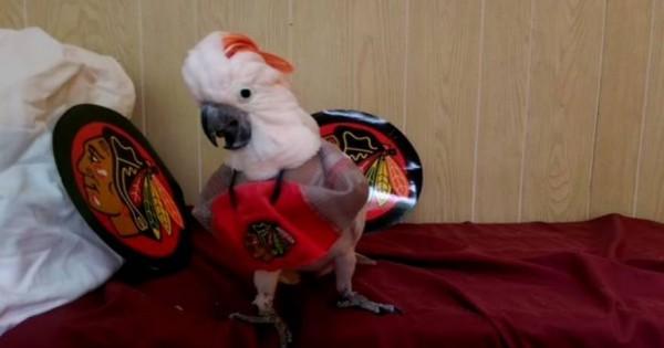 Ο παπαγάλος που… δεν συμπαθεί τις πάπιες (Βίντεο)