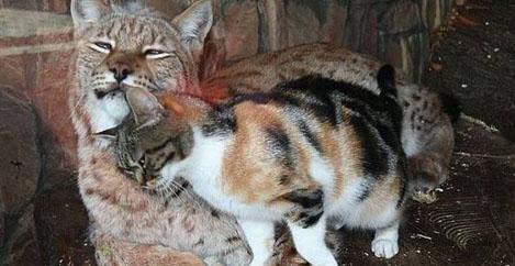 Ένα άστεγο γατάκι μπήκε κρυφά σε ένα ζωολογικό κήπο. Αυτό που συνέβη θα σας ζεστάνει την καρδιά! (Εικόνες)