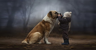 15 μαθήματα ζωής που μπορούν να μάθουν οι άνθρωποι από τους σκύλους!