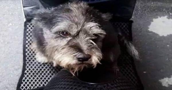Χαμένος σκύλος ξεσπά σε κλάματα όταν επιστρέφει στον ιδιοκτήτη του (βίντεο)
