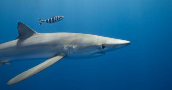 Εντυπωσιακές υποβρύχιες φωτογραφίες που αιχμαλώτισαν την ομορφιά του Ωκεανού. (Εικόνες)