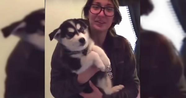 Το κουτάβι husky που μιλάει σαν… μωρό! (Βίντεο)