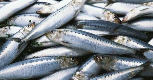 Ποια ψάρια είναι επικίνδυνα για την υγεία! Τι πρέπει να προσέχετε