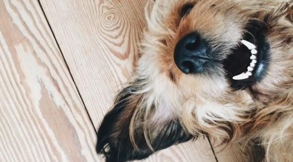 Τα σκυλιά μάς μιλάνε. Εσείς μπορείτε να τα καταλάβετε; (Βίντεο)