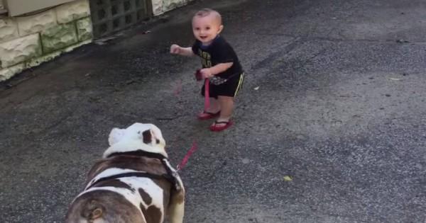 Μωρό προσπαθεί μάταια να παρακινήσει το μπουλντόγκ για βόλτα! [βίντεο]