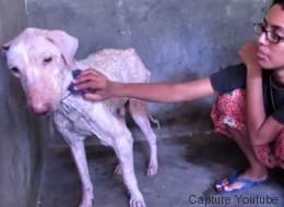 Η μεταμόρφωση ενός σκύλου που διασώθηκε από βέβαιο θάνατο από φιλόζωους (Βίντεο)