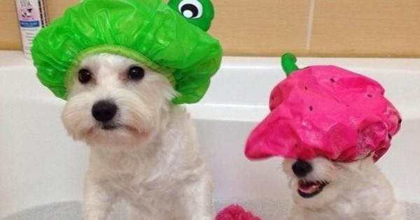 18 απίθανα πράγματα για ιδιοκτήτες σκύλων. Το 10 είναι το καλύτερο! (Εικόνες)