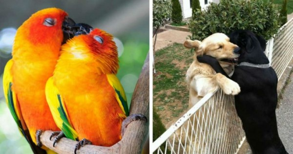 20 ζευγάρια ζώων που αποδεικνύουν την ύπαρξη αληθινής αγάπης στο ζωικό βασίλειο! (Εικόνες)