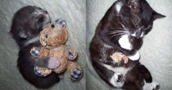 Αυτά τα ζώα παραμένουν πιστά στο… πρώτο τους παιχνίδι! (Εικόνες)