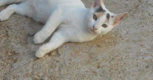 Χαρίζονται πανέμορφα γατάκια 6 μηνών!