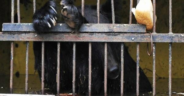 Τραγικό τέλος για τα ζώα πλημμυρισμένου ζωολογικού κήπου στη Ρωσία (Εικόνες-Βίντεο)