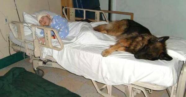 Η τελευταία προσευχή του σκύλου θα σας φέρει δάκρυα στα μάτια (Εικόνες)