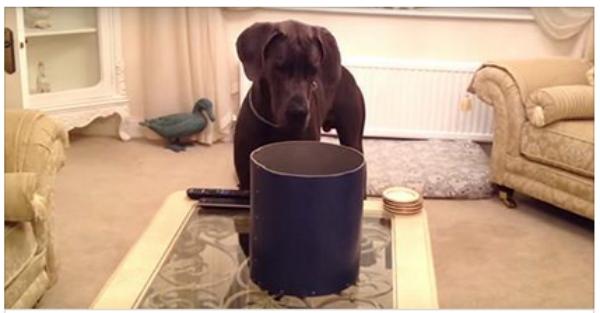 Φέρνει στο σπίτι μία φοβερή έκπληξη για το κουτάβι της!! (Βίντεο)