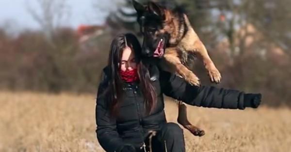Ο σκύλος πλησιάζει την εκπαιδεύτρια… Δείτε τι κάνει! (Βίντεο)