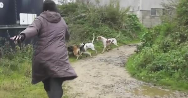 Μια ομάδα σκυλιών είναι έτοιμα να σκοτώσουν μια αλεπού. Δείτε όμως τι γίνεται όταν αυτή η γυναίκα επεμβαίνει! (Βίντεο)