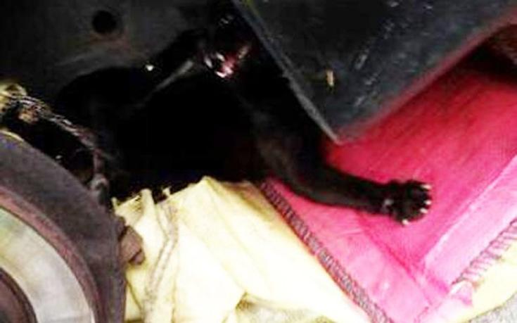 Έδεσαν γάτα κάτω από αυτοκίνητο για να πεθάνει βασανιστικά (Εικόνες)