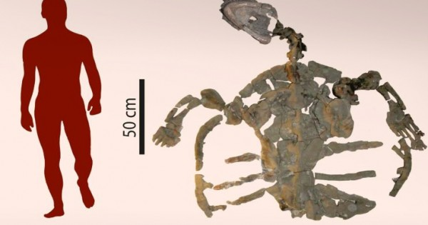 Βρέθηκε το απολίθωμα της αρχαιότερης χελώνας