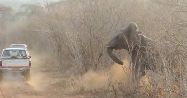 Γι΄αυτό δεν πρέπει να ενοχλείς τους ελέφαντες όταν… κοιμούνται! (video)