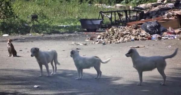 Το πρόγραμμα Sato διασώζει εγκαταλελειμμένους σκύλους και τους βρίσκει σπίτι για πάντα! ( Βίντεο)