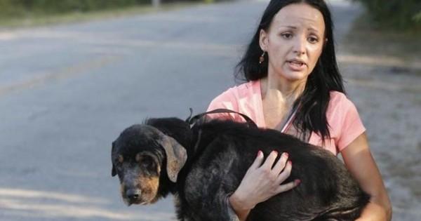 Βρήκε έναν ζωντανό φοβισμένο σκύλο ανάμεσα στα άψυχα σώματα άλλων σκυλιών. Αυτό που έγινε στη συνέχεια πρέπει να το δείτε… (Βίντεο)