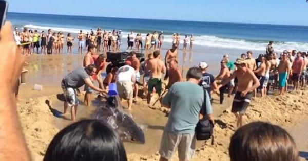 Βίντεο: Συγκινητική προσπάθεια να σώσουν καρχαρία που βγήκε στη… στεριά (Βίντεο)