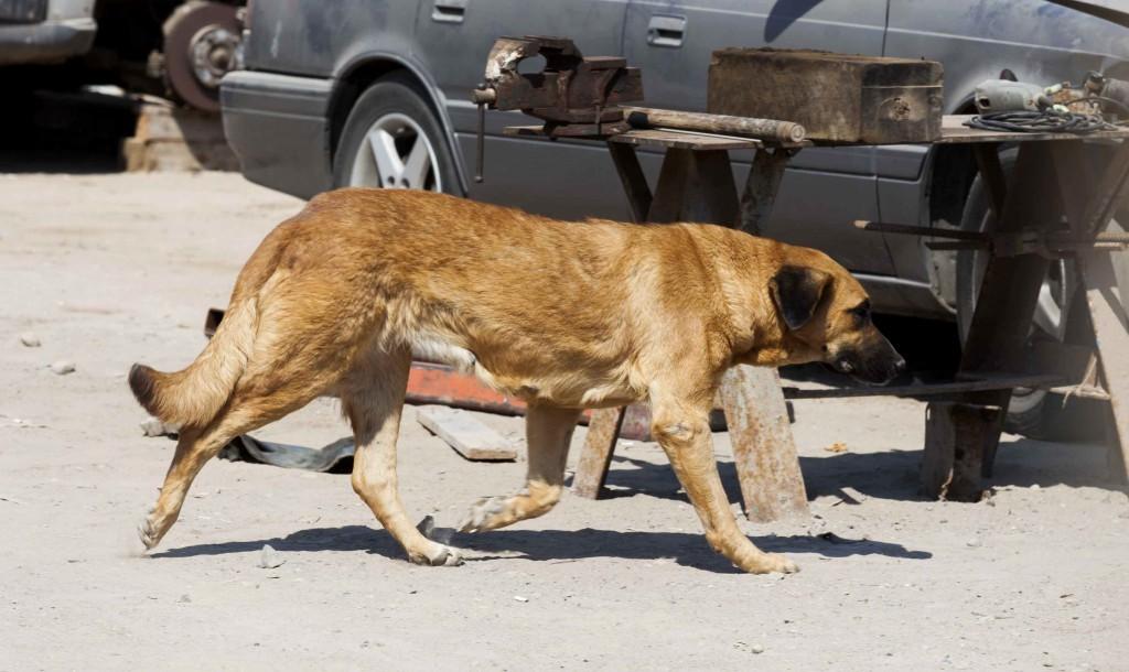 σκυλίτσα