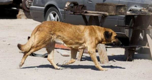 Θα μείνετε άφωνοι! Έγκυος σκυλίτσα θήλαζε αγοράκι για να μην πεθάνει από ασιτία! (φωτο)