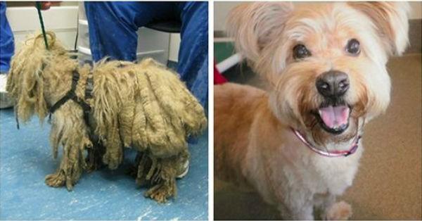 21 γλυκύτατα σκυλάκια πριν και μετά τη διάσωσή τους…Τεράστια Αλλαγή; (Εικόνες)