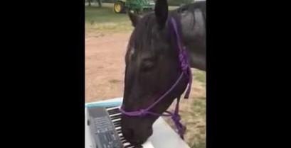 Ένα άλογο σολάρει στα πλήκτρα (Βίντεο)
