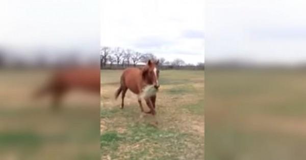 Ένα άλογο τρέχει για να φέρει φαγητό στον δεμένο φίλο του! (Βίντεο)